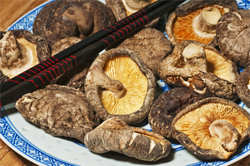 Pilze auf Teller Vitalheilpilze